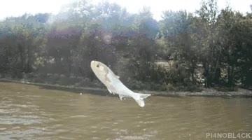 Enlace a Así pescan en Australia