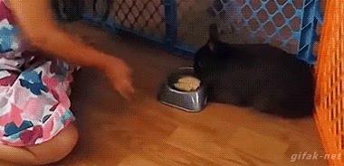Enlace a ¡Que no tengo hambre! ¡Déjame, humana!