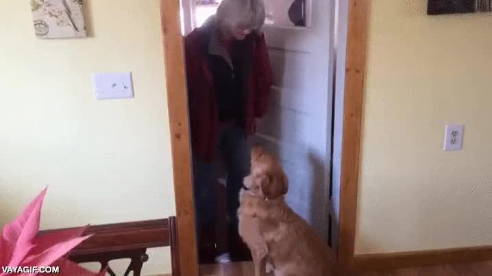 Enlace a El perro que no quería ser besado