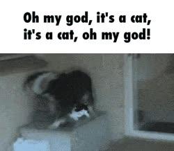 Enlace a El perro más emocionado del mundo por ver a un gato