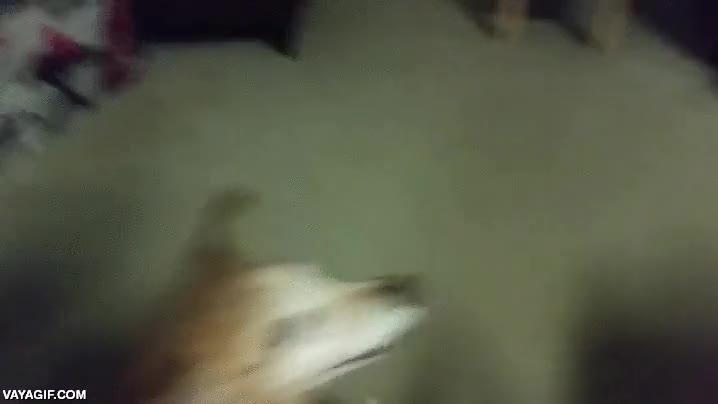 Enlace a El perro Dixie tiene 11 años, pero cuando hay una chuche por medio vuelve a tener 1 añito