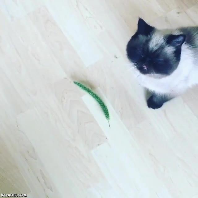 Enlace a Creo que no he visto nunca a un gato tan disgustado