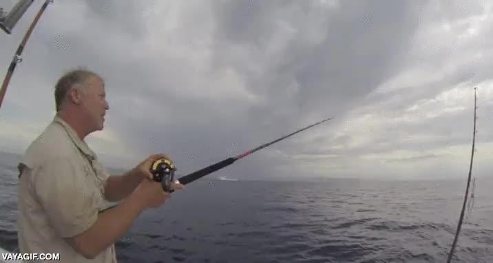 Enlace a Debe dar bastante impresión ver un pedazo de tiburón como este saltando cerca de tu barca