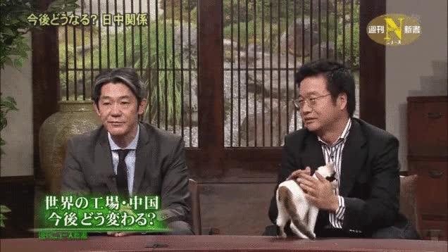 Enlace a En un programa de debate japonés tienen un gato en el plató para reducir la tensión
