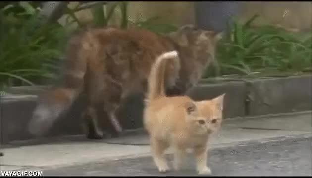 Enlace a El gatito que se hizo amigo del cámara