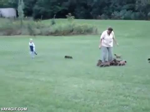 Enlace a ¡Corre Timmy, corre por tu vida!