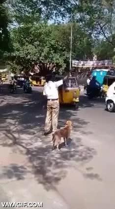 Enlace a Este hombre para el tráfico en una carretera muy transitada para que pueda cruzar este perro