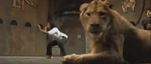 Enlace a Venga sí, hagamos una escena de artes marciales con un león en primer plano, ¿qué podría salir mal?