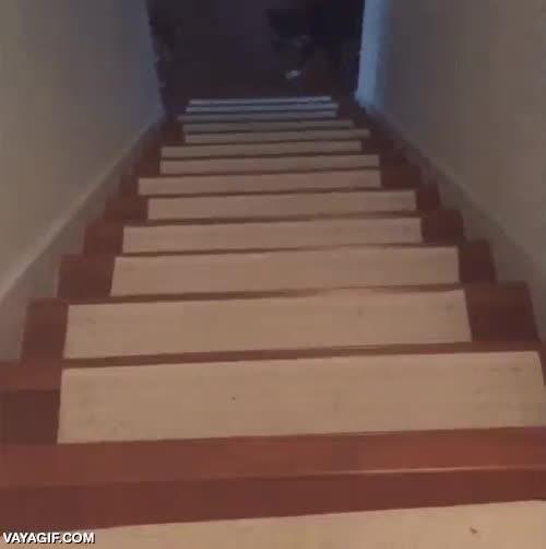 Enlace a Este perro tiene una extraña fobia a cruzar puertas, pero ha encontrado la manera de superarla