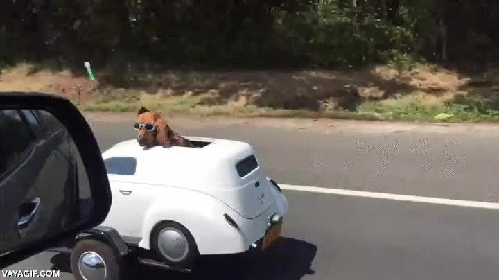 Enlace a Y yo yendo a los sitios en bicicleta, ¡qué envidia este perro!