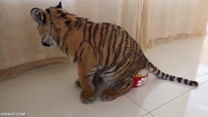 Enlace a El tigre que aprendió que oler tus necesidades después de hacerlas no es buena idea
