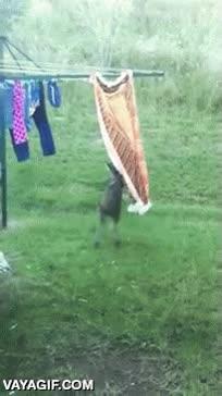 Enlace a El mejor ayudante de lavandería que puedes encontrar