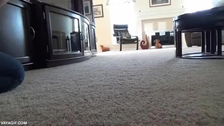 Enlace a El perro que soñaba con ser especialista de acción de cine