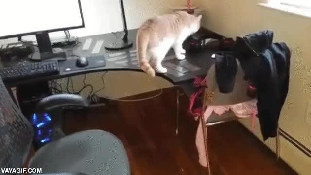 Enlace a Cómo atrapar a un gato