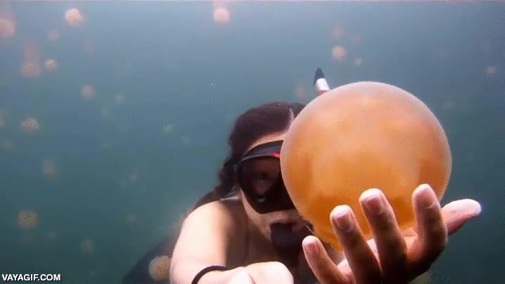 Enlace a Hay que estar muy LOCO para bucear así entre medusas