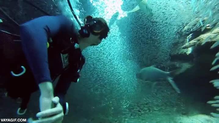 Enlace a Buceando en un túnel de peces, impresionante