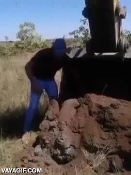 Enlace a Armadillo gigante encontrado en una excavación