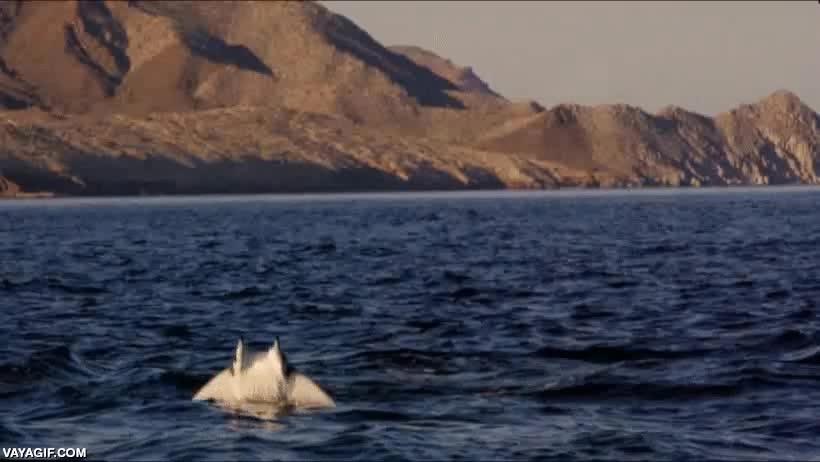 Enlace a El día que Michael Bay decidió dedicarse a los documentales de animales