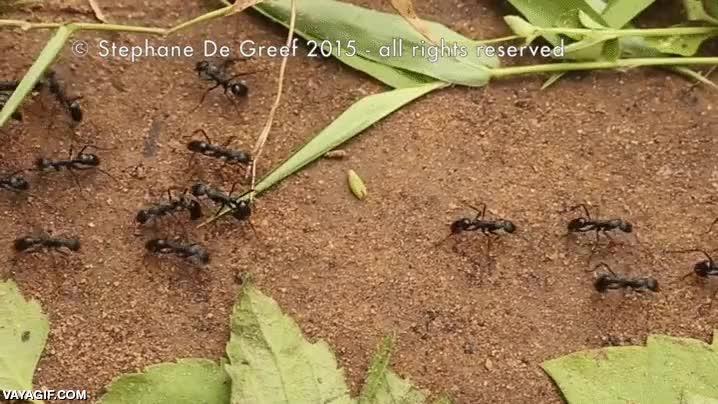 Enlace a Trabajo en equipo. Nadie como las hormigas