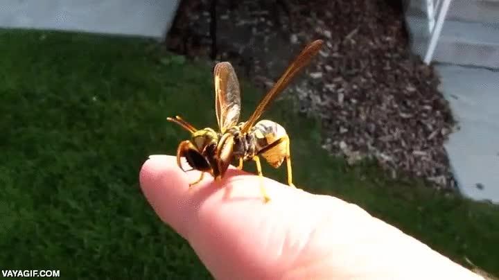 Enlace a El día que la mantis religiosa se enamoró de la avispa