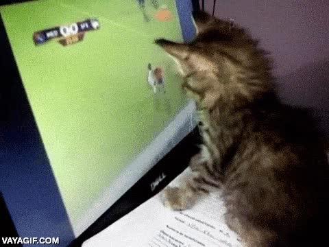 Enlace a Gatito Futbolero