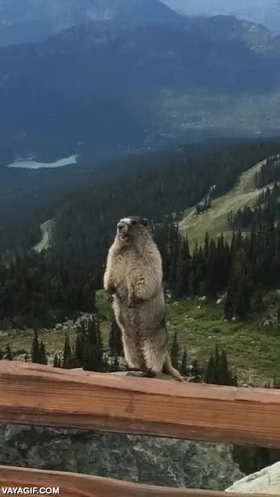 Enlace a Cuando pierdes a uno de tus amigos en una excursión en la montaña