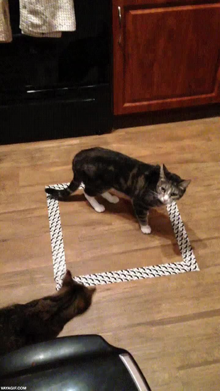 Enlace a El truco del cuadrado que atrapa los gatos casi siempre funciona