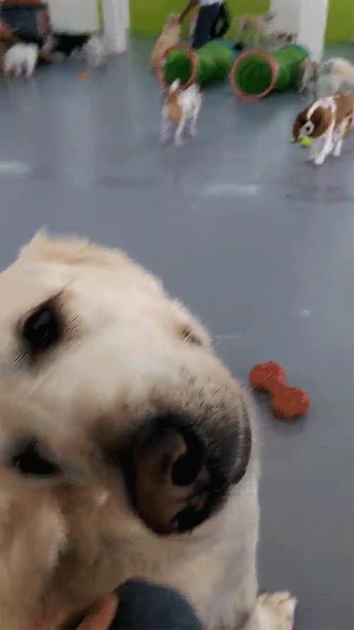 Enlace a Así reacciona este perro cada vez que le soplan en las orejas