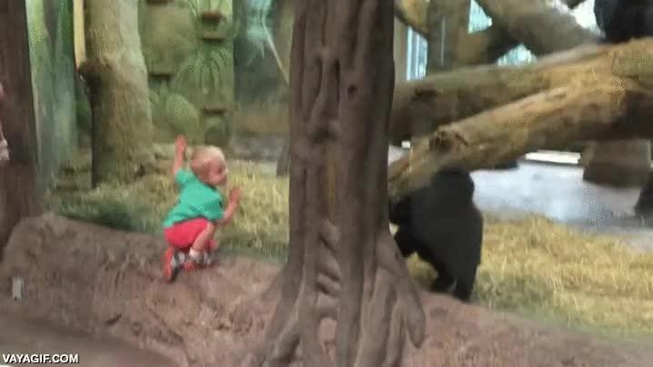 Enlace a Un bebé jugando con una cría de gorila dentro del zoo