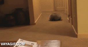 Enlace a Con todos ustedes, ¡el mapache croqueta!