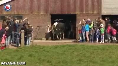 Enlace a Así de felices se ponen estas vacas cuando las sacan al exterior por primera vez en su vida