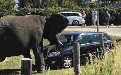 Enlace a Yo mejor no haría enfadar a un elefante