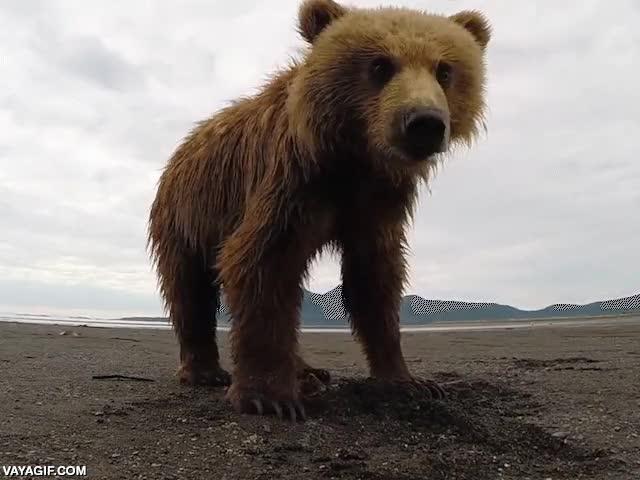 Enlace a ¿Sabes qué es lo que ves cuando un oso pardo te pega un zarpazo?