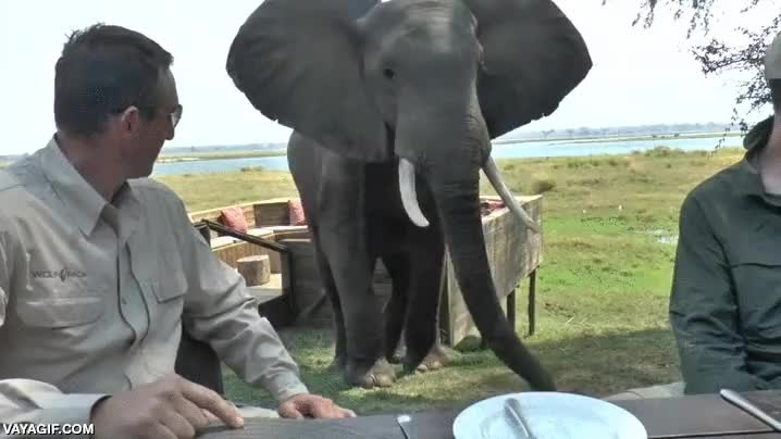 Enlace a Pues parece que al elefante no le ha gustado el menú del día