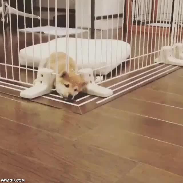 Enlace a Prison break canino