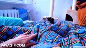 Enlace a Las mañanas con un gatito así deben ser de lo más divertido