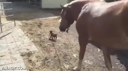 Enlace a Sacando a pasear al caballo