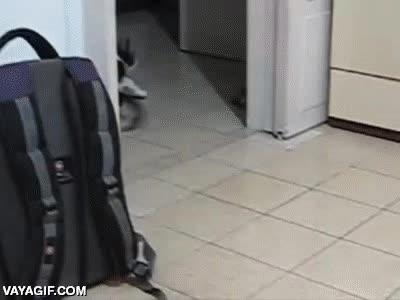 Enlace a El gato que se crió entre perros