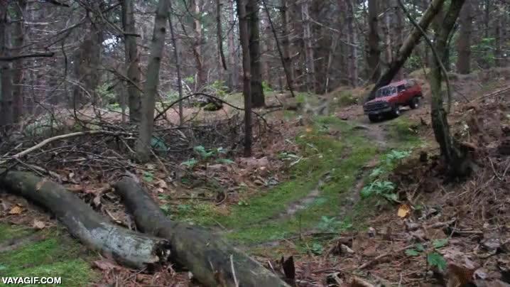 Enlace a Se han captado imágenes de un gato gigante en los bosques de Estados Unidos
