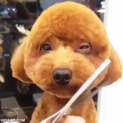 Enlace a No sé a quién le puede parecer una buena idea hacerle esto a un perro