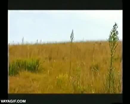 Enlace a Esto es un caracal cazando su presa al vuelo, ¡menudo salto!