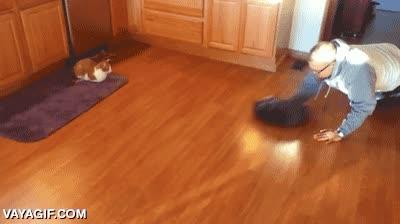 Enlace a ¿Quién dice que no se puede jugar con los gatos? Bueno, siempre se puede jugar usando un gato