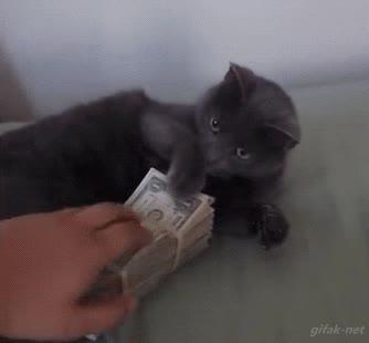 Enlace a ¡No toques mi dinero!
