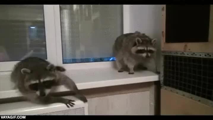 Enlace a ¡Fiesta loca de mapaches en mi casa esta noche!