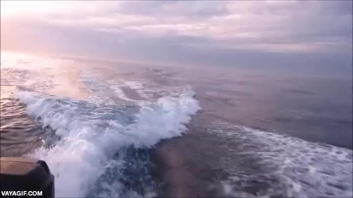 Enlace a No sabes lo que es el miedo en alta mar hasta que ves dos orcas persiguiendo tu lancha