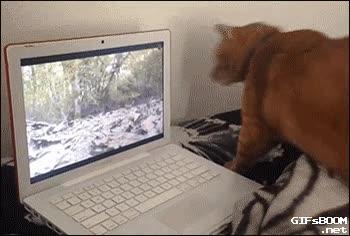 Enlace a Las nuevas tecnologías son difíciles de entender para los animales