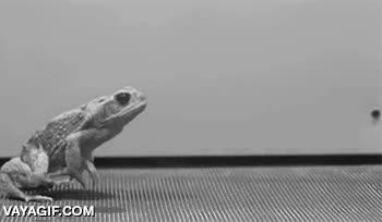 Enlace a Así es la dinámica de movimiento del salto hacia adelante de un sapo