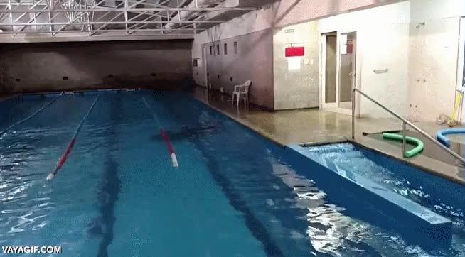 Enlace a Así reaccionó una piscina en Argentina al terremoto de Chile