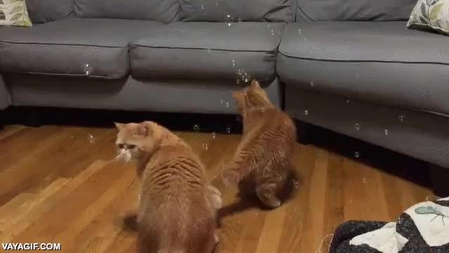 Enlace a ''¿Pero qué demonios son estas pequeñas cosas flotantes?''