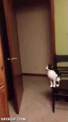 Enlace a Intentamos dejar fuera del alcance del gato algunas cosas, pero es imposible